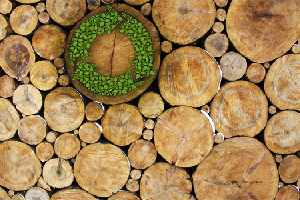 Biomassa Iannipartners